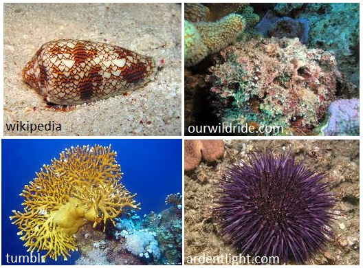 A cone shell, a stonefish, fire coral, and a sea urchin.  No touchy.
