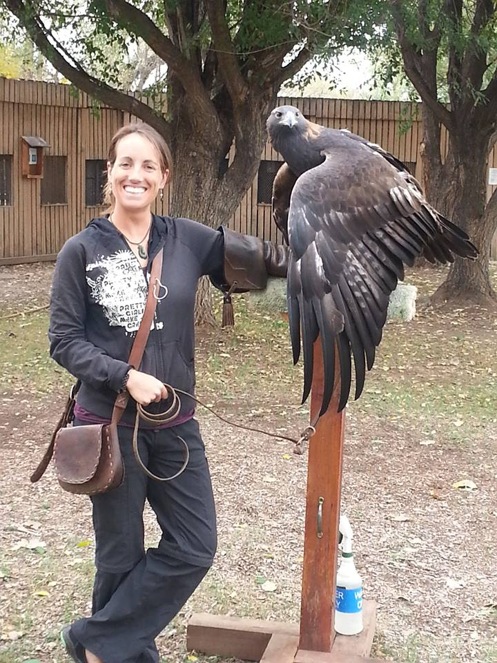 Handling the RMRP's permanently disabled educational ambassador female Golden Eagle.