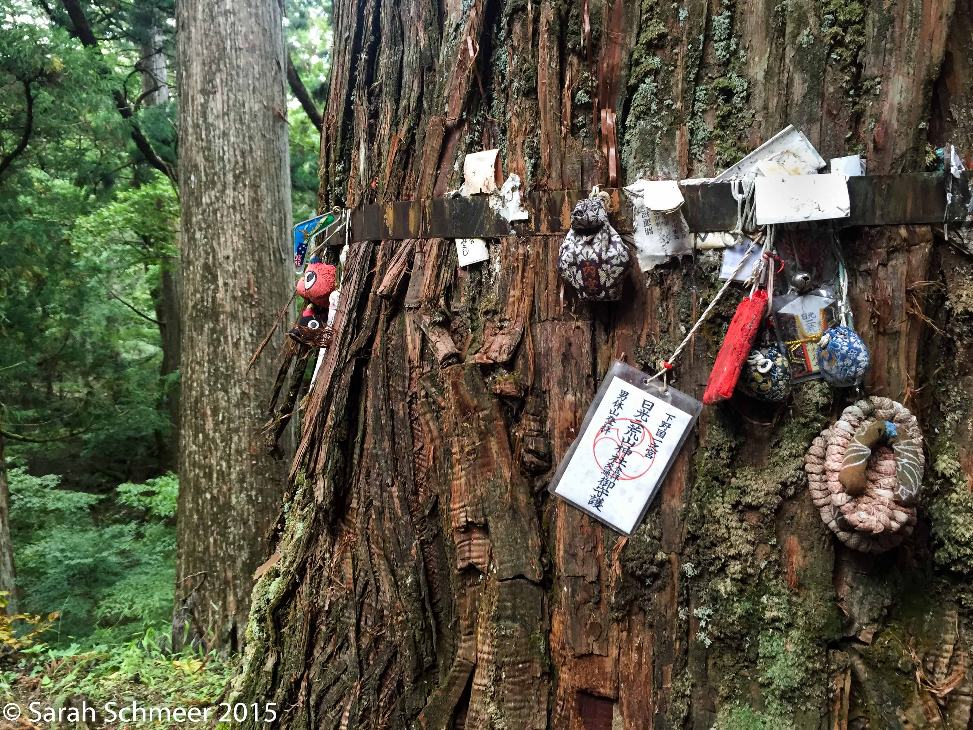 Prayers and totems tucked into a revered tree at a Shinto shrine in Nikko, Japan.